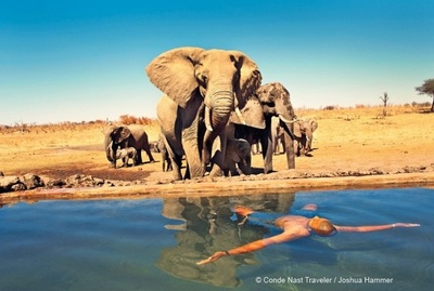 Elephant herd visits the swimming pool at Somalisa Camp, Hwange