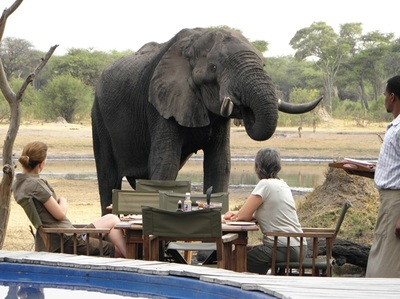 Elephant visitor at breakfast, The Hide, Hwange