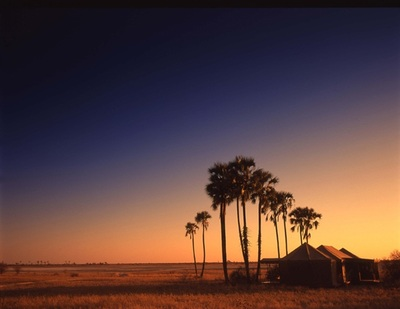 Jack's Camp at sunset, under the palms, Makgadikgadi, Botswana